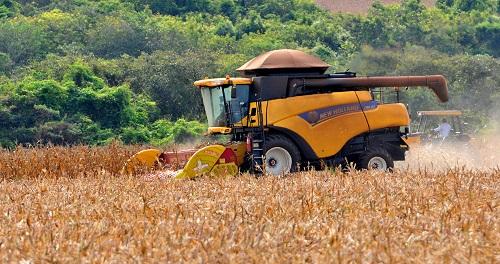 Preço da saca de milho dispara  e eleva custos de outros setores