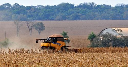 Produção de milho em MS tem queda estimada em 32%