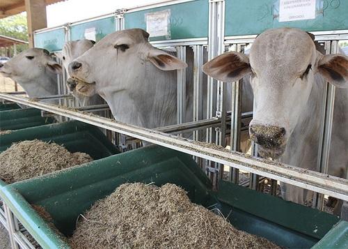 MS é autorizado por governo Chileno a exportar carne bovina