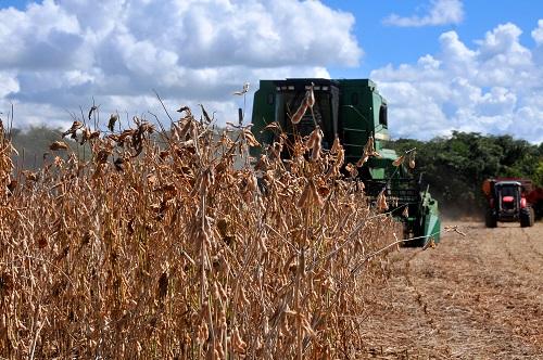 Pesquisa aponta que soja é atividade mais rentável para agricultor