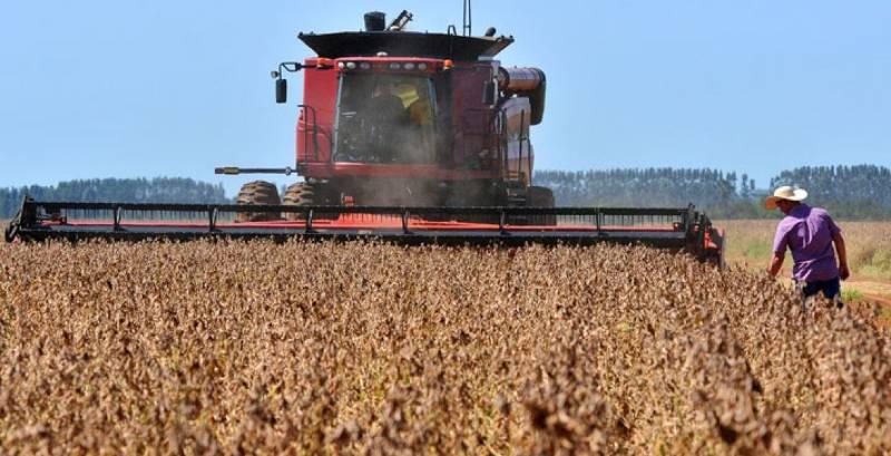 Plantio é antecipado com expectativa de produzir 9 milhões de toneladas