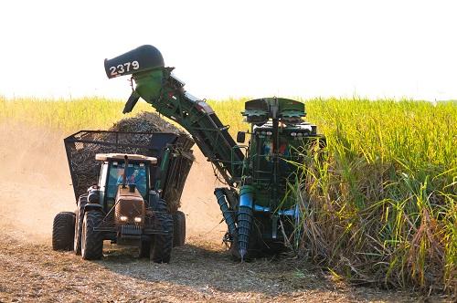 Lavoura de cana-de-açúcar no Estado - Foto: Ascom Biosul