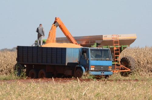 Leilão eletrônico terá lance inicial de 50 mil toneladas do cereal - Foto: Arquivo Correio do Estado