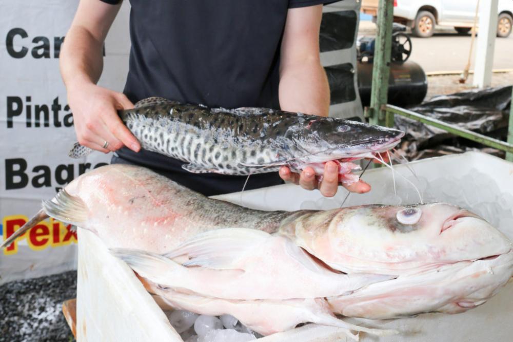 Feira do Peixe acontece às vésperas da Semana Santa
