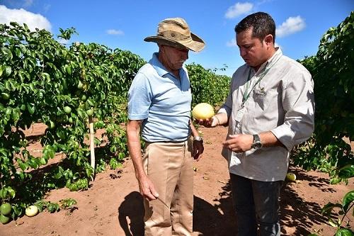 Fruticultura é opção de diversificação na atividade rural - Foto: Ascom Famasul/ João Carlos Castro