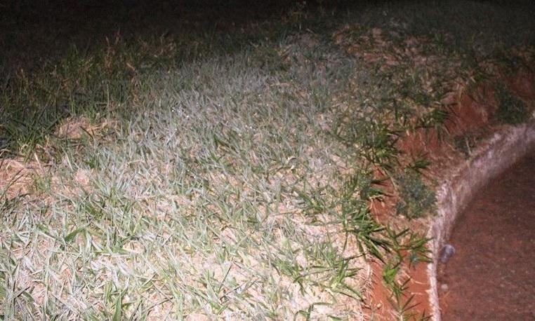 Em Amambaí vegetação ficou congelada durante a madrugada - Foto: Reprodução/A Gazeta News